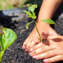 OSHC-Plant-Hands
