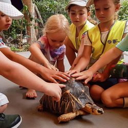 OSHC-Turtle